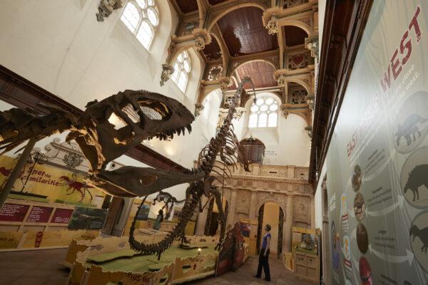 Dinos-_h0i2368_large-scaled