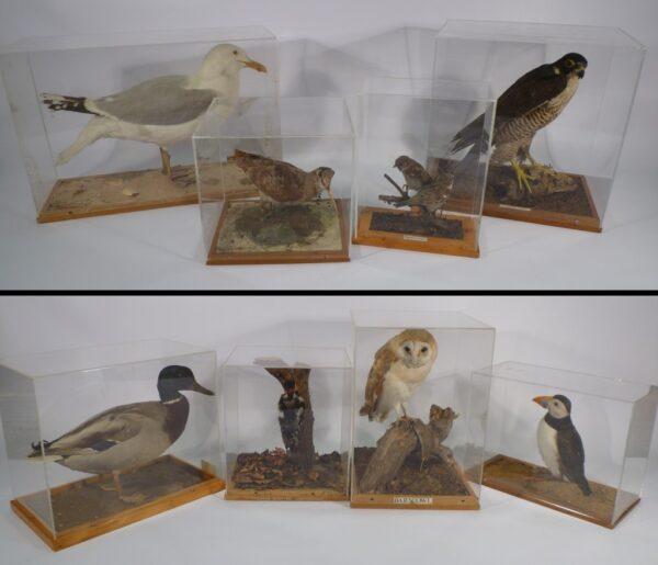 adaptations-birds-1024x879-1